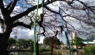 Aerial Dance Performance in Ala Moana Beach Park
